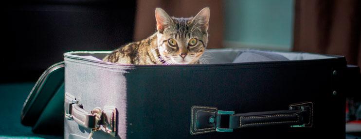 gato de viaje en maleta