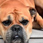 ¿Sabías que existen redes sociales para mascotas?