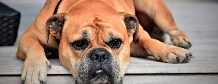 redes sociales para mascotas
