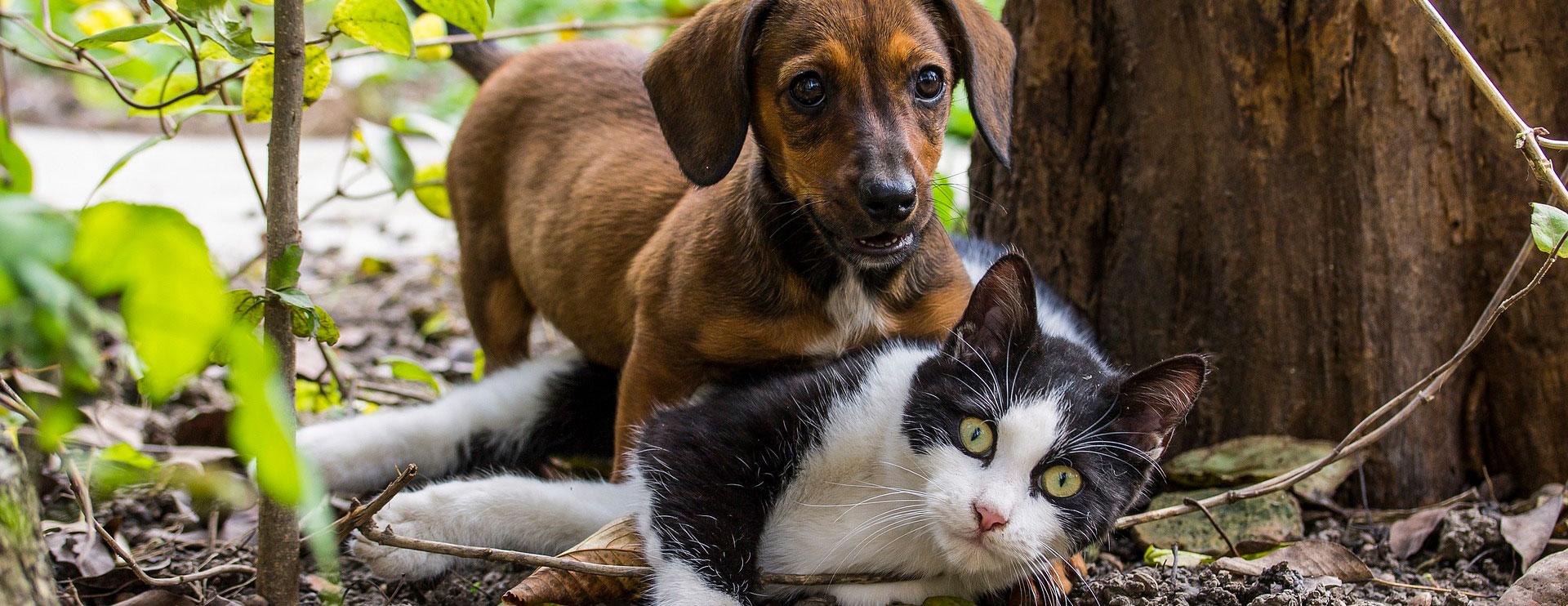 seguro RC mascotas